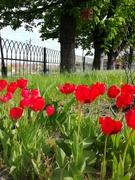 Бажаємо усім весни в душі і краси навколо