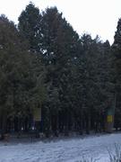 Школа взимку